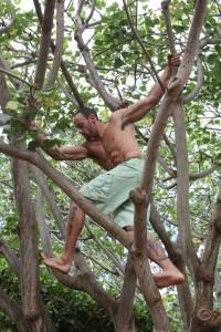 Gabe Kapler in a tree